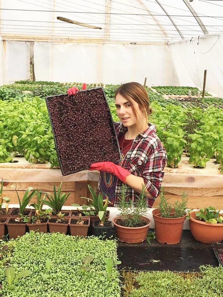 Розміром у мізинець: родина Гаригів із Тернопільщини вирощує вдома мініатюрну зелень (ФОТО), фото-1
