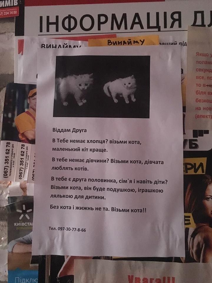 """""""В тебе немає хлопця?"""": в Тернополі креативно роздають кошенят всім охочим (фото), фото-1"""