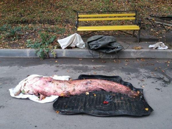 """""""Та він зростом, як я"""": тернополянин упіймав гігантського сома (ФОТО), фото-1"""
