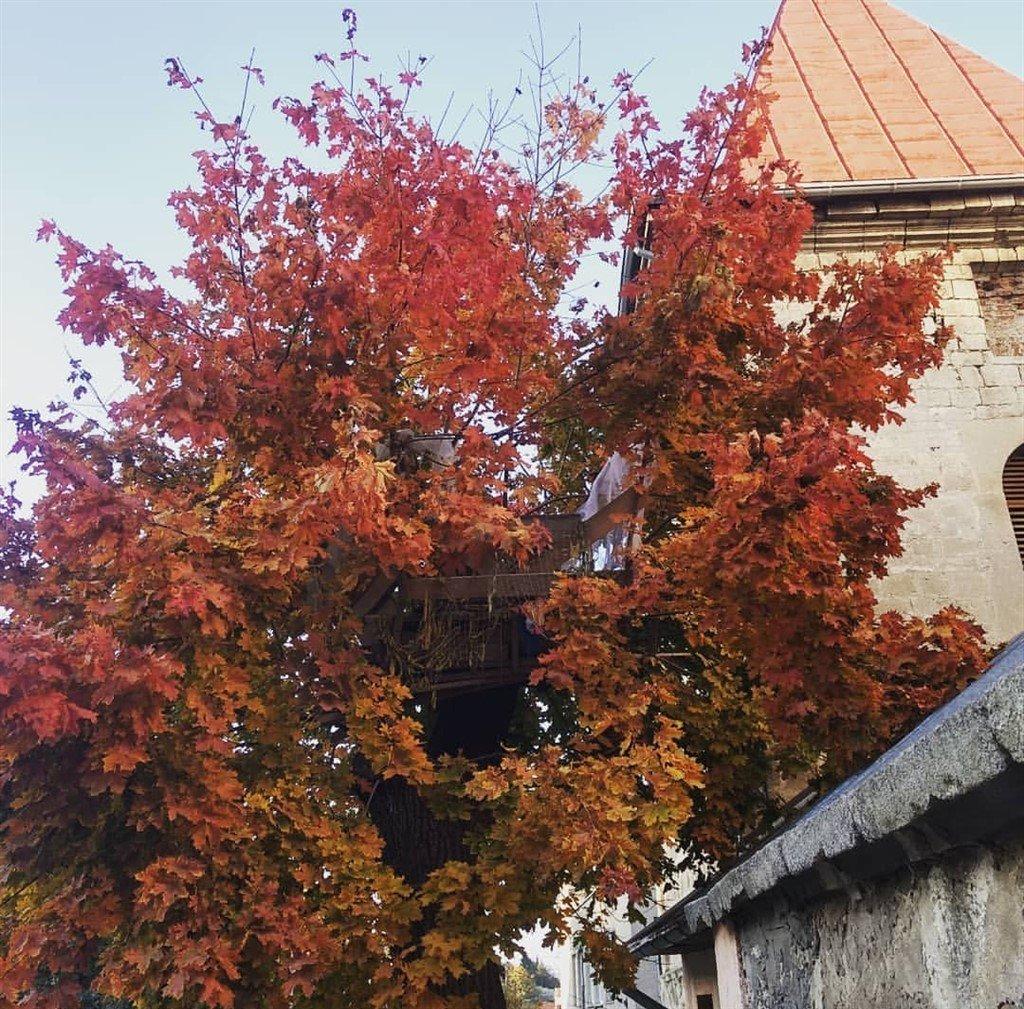 """""""Осінь, покидають свої гнізда"""": на Тернопільщині безпритульні живуть на деревах (ФОТО), фото-1"""