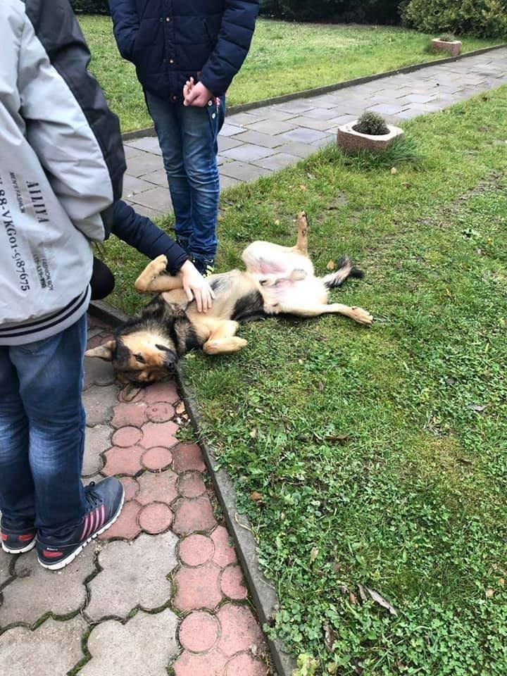 В Тернополі священик копняками виганяв із храму безпритульного пса просто посеред літургії, фото-1