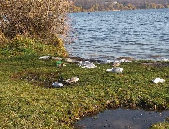 """""""Вони помирали на воді, їх вітром приносило до берега"""": на Тернопільське озеро прилетіли хворі птахи, фото-1"""