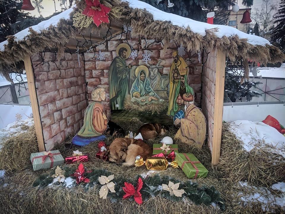 На Тернопільщині у різдвяній шопці замість овець опинилися собаки (ФОТО), фото-1