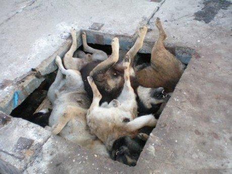 У селі на Тернопільщині жорстоко розстріляли всіх собак (ФОТО), фото-1
