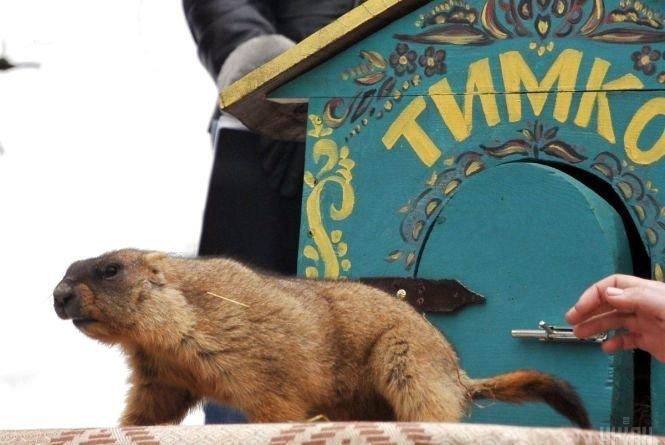 Що слід знати тернополянам про передбачення бабака Тимка (ФОТО), фото-1