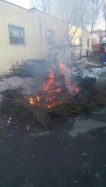 Тернополяни спалюють ялинки просто біля житлових будинків (ФОТОФАКТ), фото-1