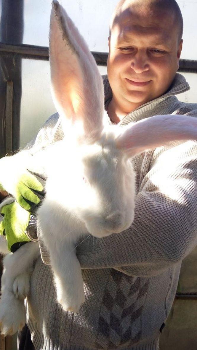 На Тернопільщині вирощують гігантських кролів (ФОТО), фото-1