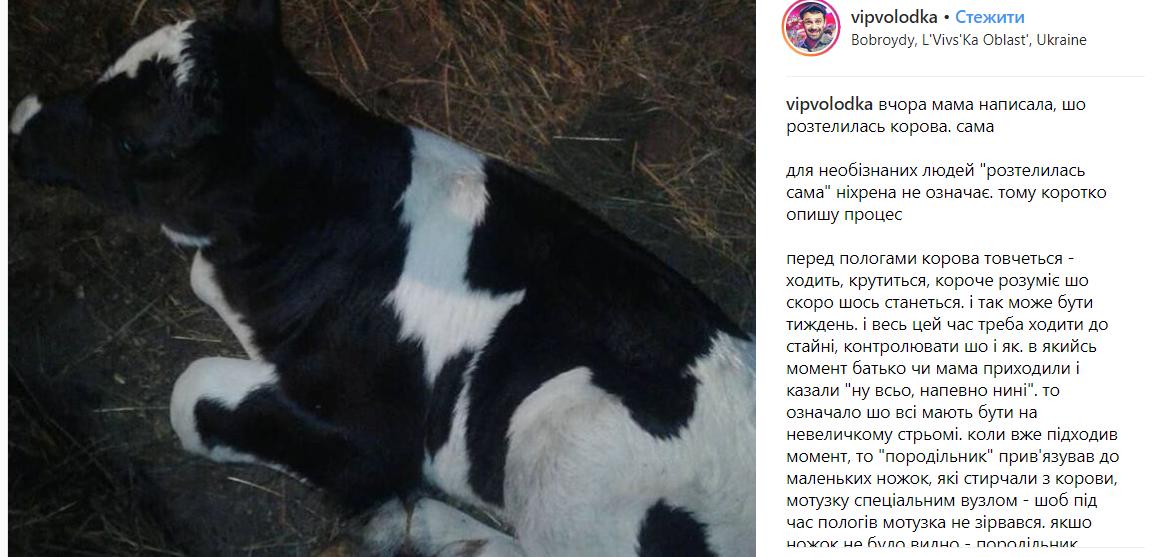 """""""Кажете, у вас нецікаво в офісах"""": Володька із """"VIP-Тернопіль"""" приголомшив розповіддю про пологи своєї корови (ФОТО), фото-1"""