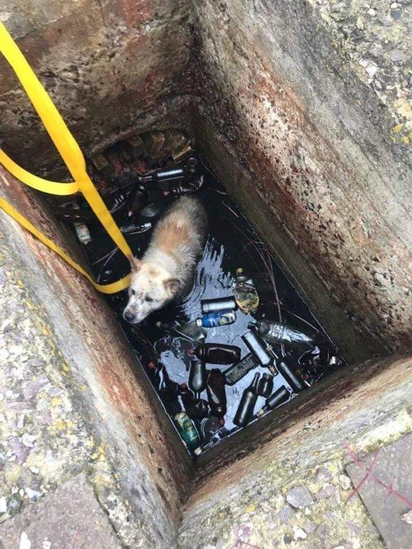 У Тернополі рятували собаку, який потрапив у пастку (фото), фото-3