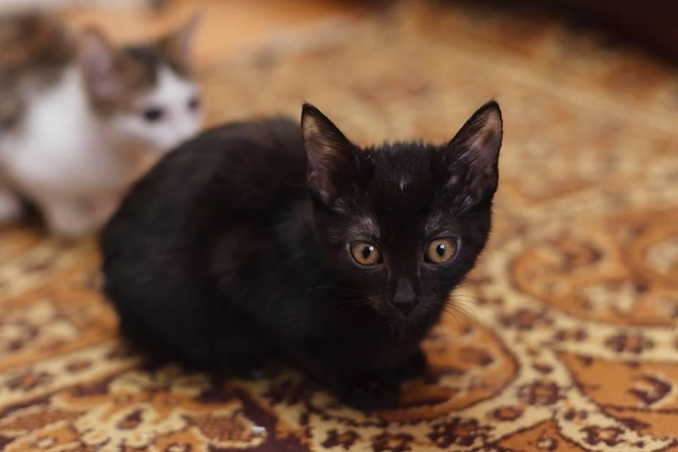 Тернополянка врятувала кошенят, яких несли у поле, хоч в самої дитина з інвалідністю (ФОТО), фото-4