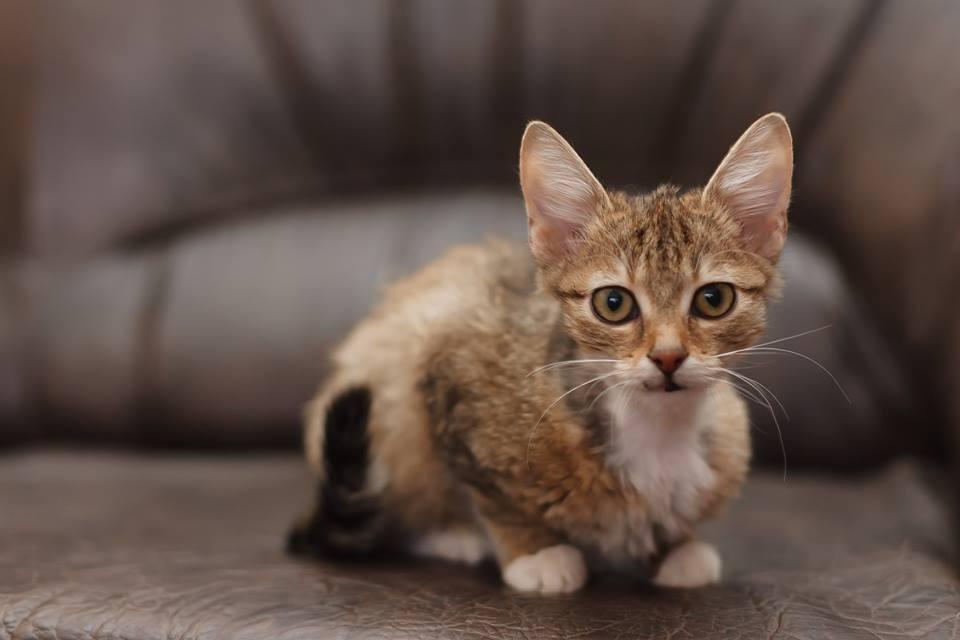 Тернополянка врятувала кошенят, яких несли у поле, хоч в самої дитина з інвалідністю (ФОТО), фото-3