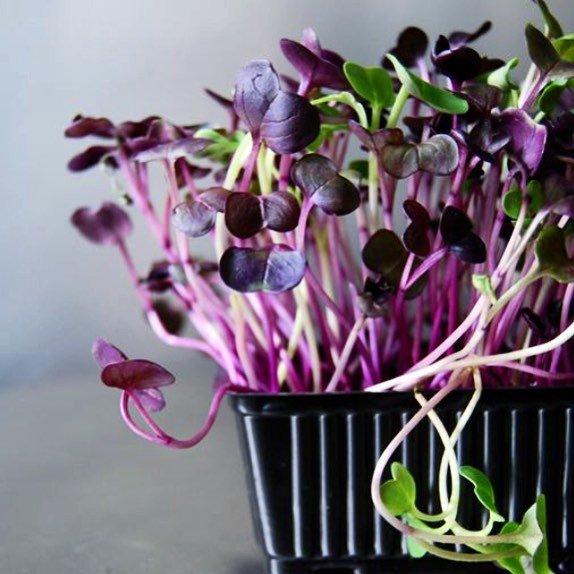 Молоде подружжя з Тернопільщини єдине в цілій області, котре вирощує салат та їстівні квіти без ґрунту (ФОТО), фото-1
