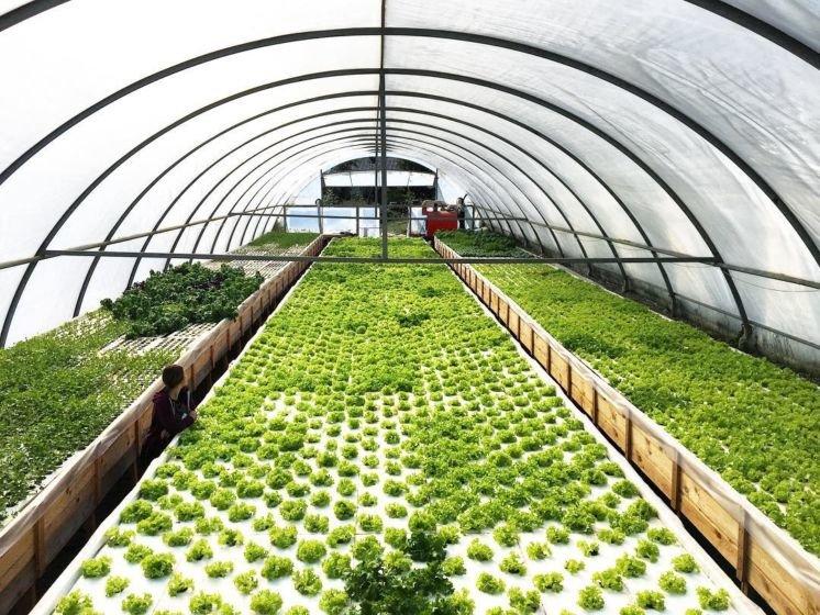 Молоде подружжя з Тернопільщини єдине в цілій області, котре вирощує салат та їстівні квіти без ґрунту (ФОТО), фото-4
