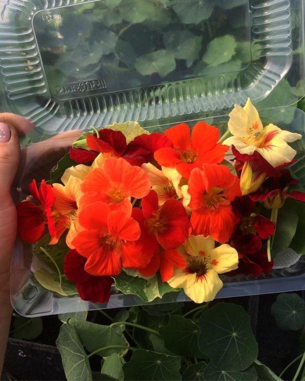 Молоде подружжя з Тернопільщини єдине в цілій області, котре вирощує салат та їстівні квіти без ґрунту (ФОТО), фото-11