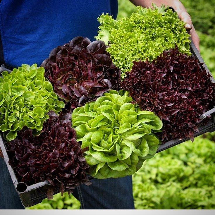 Молоде подружжя з Тернопільщини єдине в цілій області, котре вирощує салат та їстівні квіти без ґрунту (ФОТО), фото-9