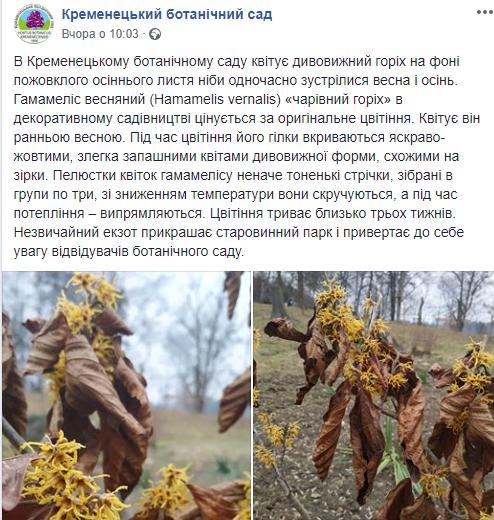 """""""Одночасно зустрілися весна і осінь"""": у ботанічному саду на Тернопільщині квітує дивовижний горіх (ФОТОФАКТ), фото-2"""