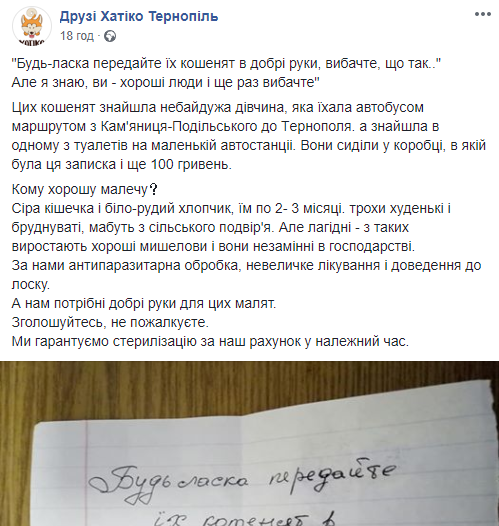 На одній з автостанцій Тернопільщини невідомі залишили коробку з кошенятами, грішми і запискою (ФОТО), фото-6