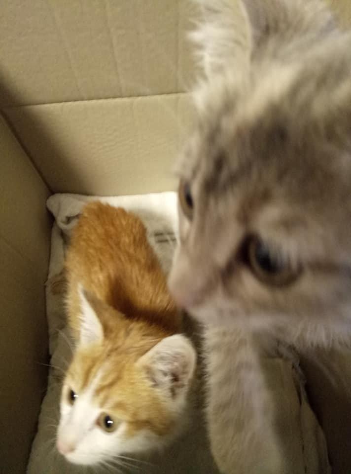 На одній з автостанцій Тернопільщини невідомі залишили коробку з кошенятами, грішми і запискою (ФОТО), фото-4
