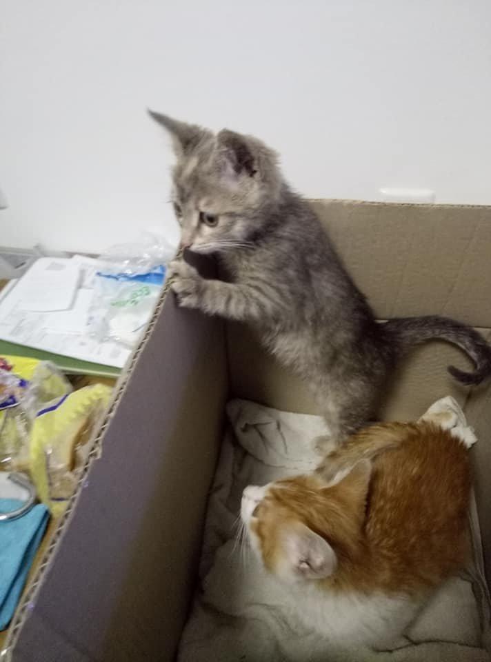 На одній з автостанцій Тернопільщини невідомі залишили коробку з кошенятами, грішми і запискою (ФОТО), фото-3