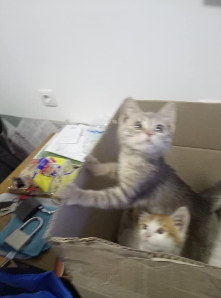 На одній з автостанцій Тернопільщини невідомі залишили коробку з кошенятами, грішми і запискою (ФОТО), фото-2