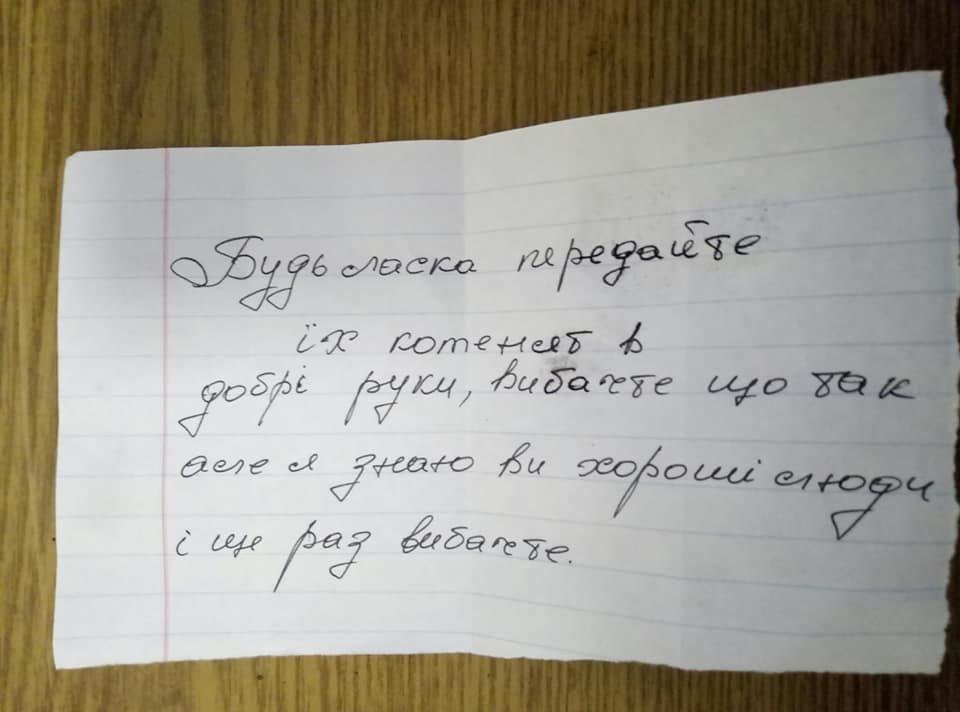 На одній з автостанцій Тернопільщини невідомі залишили коробку з кошенятами, грішми і запискою (ФОТО), фото-1