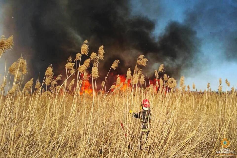 Вогонь був на кілька метрів у висоту: за Тернопільським ставом невідомі випалили 2 га трави (Фото), фото-5