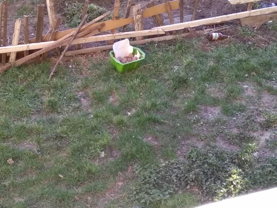 Садять картоплю і розводять вогонь: тернополянка нарікає, що сусіди облаштували під вікнами будинку город (Фото), фото-3