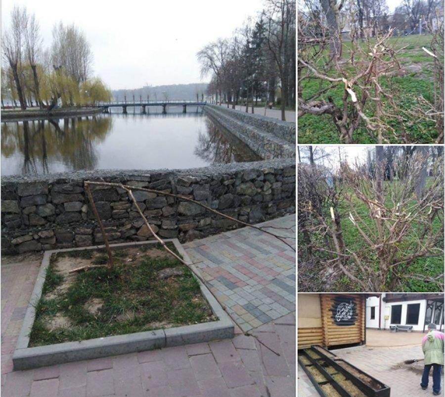 У Тернополі вандали поламали молоді кущі та дерева у парку Шевченка (ФОТО), фото-1