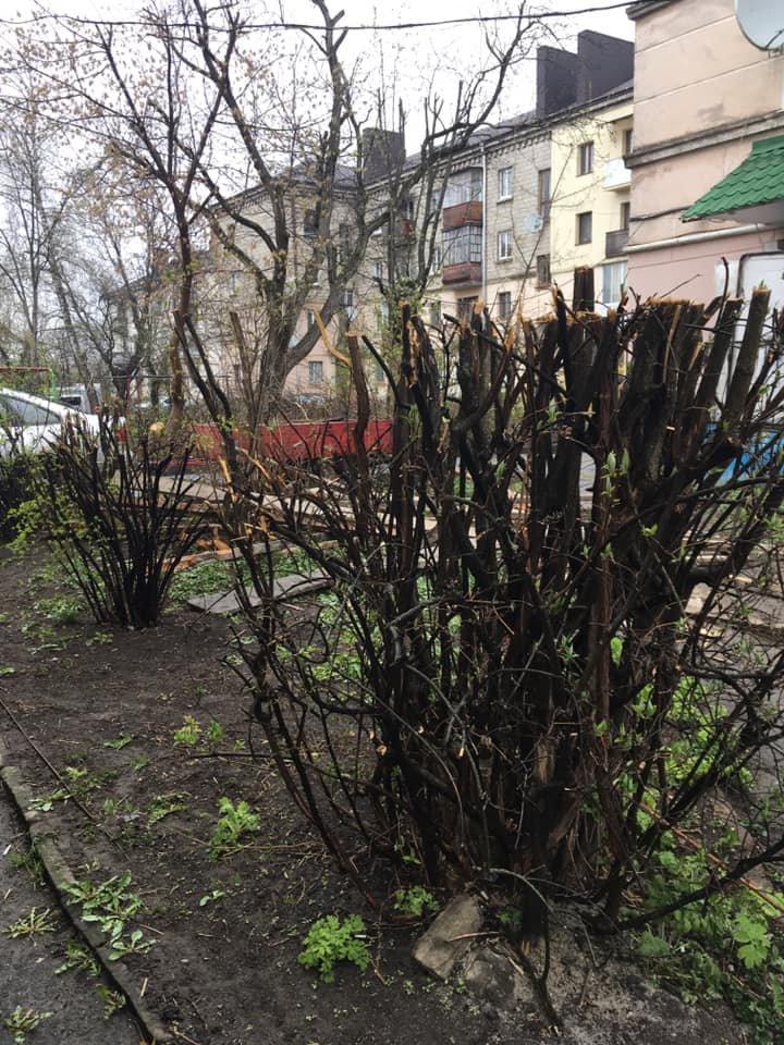 """""""Залишили самі стовпчики"""": комунальники зрізали окрасу тернопільського двору (Фото), фото-1"""