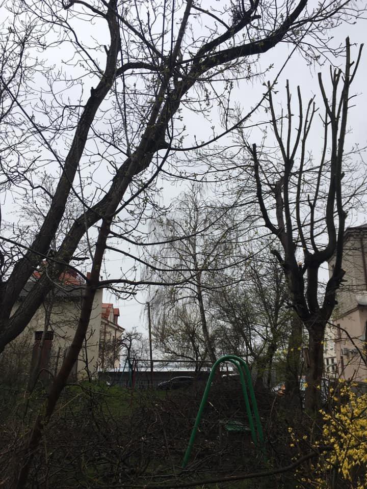 """""""Залишили самі стовпчики"""": комунальники зрізали окрасу тернопільського двору (Фото), фото-2"""