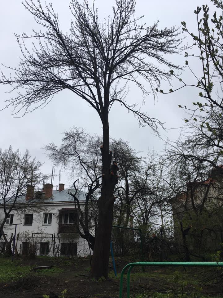 """""""Залишили самі стовпчики"""": комунальники зрізали окрасу тернопільського двору (Фото), фото-3"""