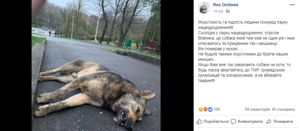 У тернопільському парку жорстоко розправилися із собакою (ФОТОФАКТ), фото-1
