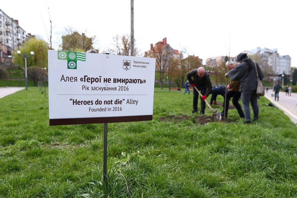 У Тернополі висадили 30 унікальних тюльпанових дерев (фото), фото-2