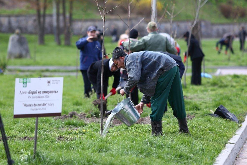 У Тернополі висадили 30 унікальних тюльпанових дерев (фото), фото-3