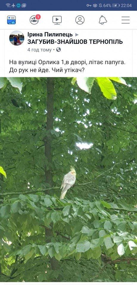 Тернополем літає неймовірний екзотичний папуга (ФОТОФАКТ), фото-1
