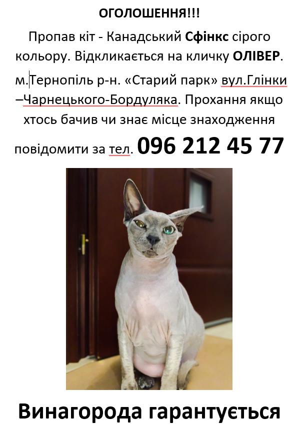 За повернення кота тернополянка готова заплатити велику винагороду, проте телефонують лише шахраї (ФОТО), фото-1
