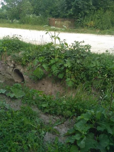 Село на Тернопільщині скоро зникне з лиця Землі: мешканці скаржаться на безлад (ФОТО), фото-2