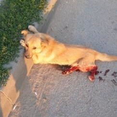 Все повернеться бумерангом: на Тернопільщині авто на швидкості збило двох собак і поїхало (ФОТО 18+), фото-3