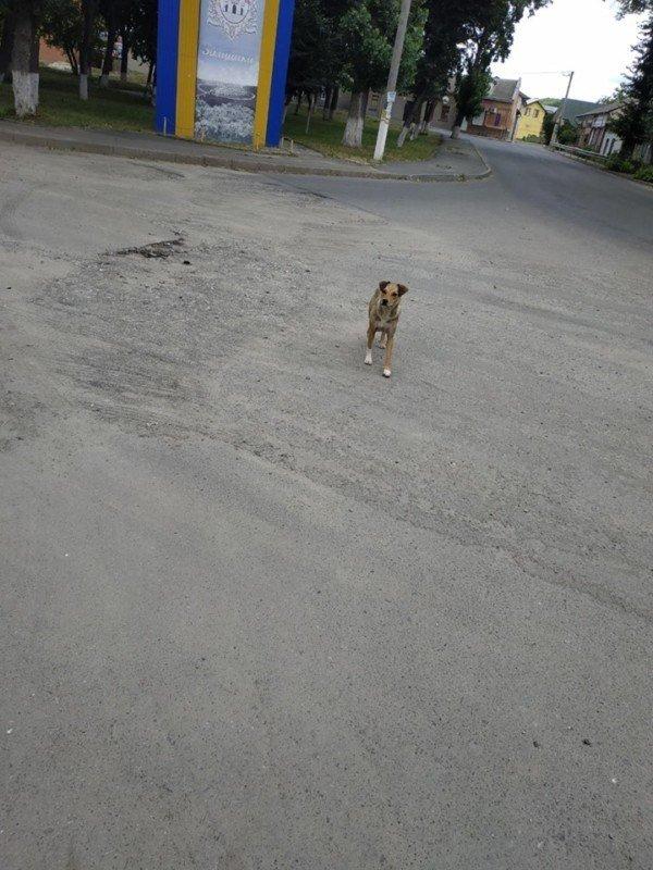 Все повернеться бумерангом: на Тернопільщині авто на швидкості збило двох собак і поїхало (ФОТО 18+), фото-2
