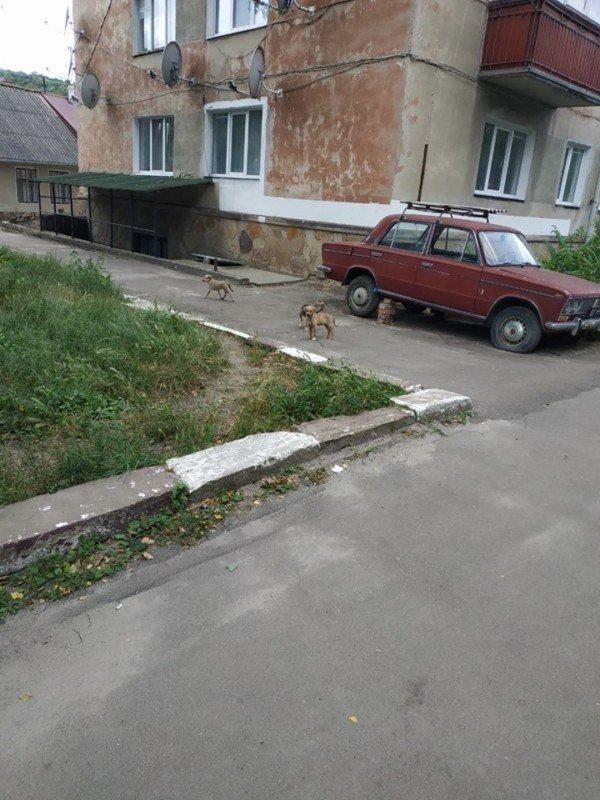 Все повернеться бумерангом: на Тернопільщині авто на швидкості збило двох собак і поїхало (ФОТО 18+), фото-1