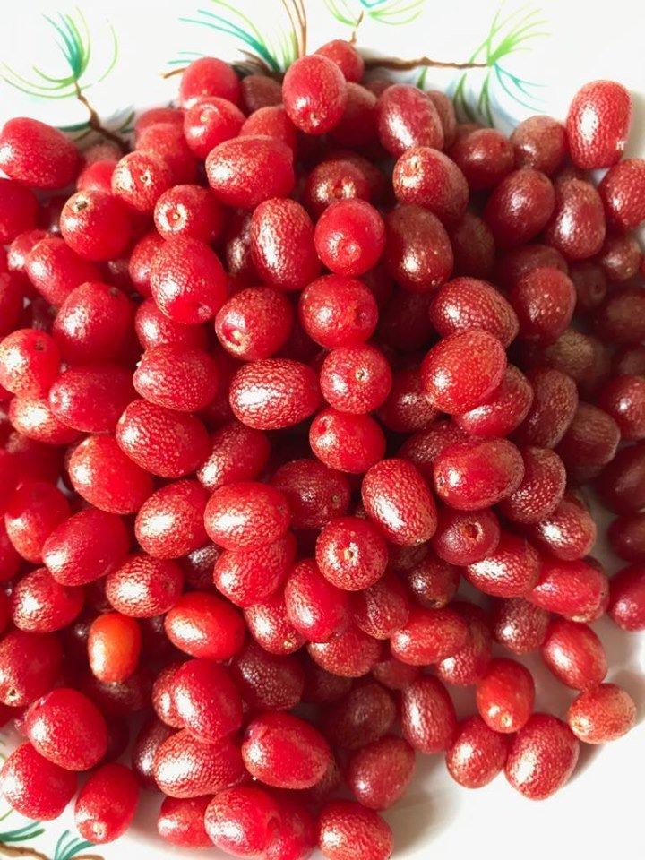 На Тернопільщині омолоджуються унікальною ягодою з кумедною назвою (ФОТО), фото-2