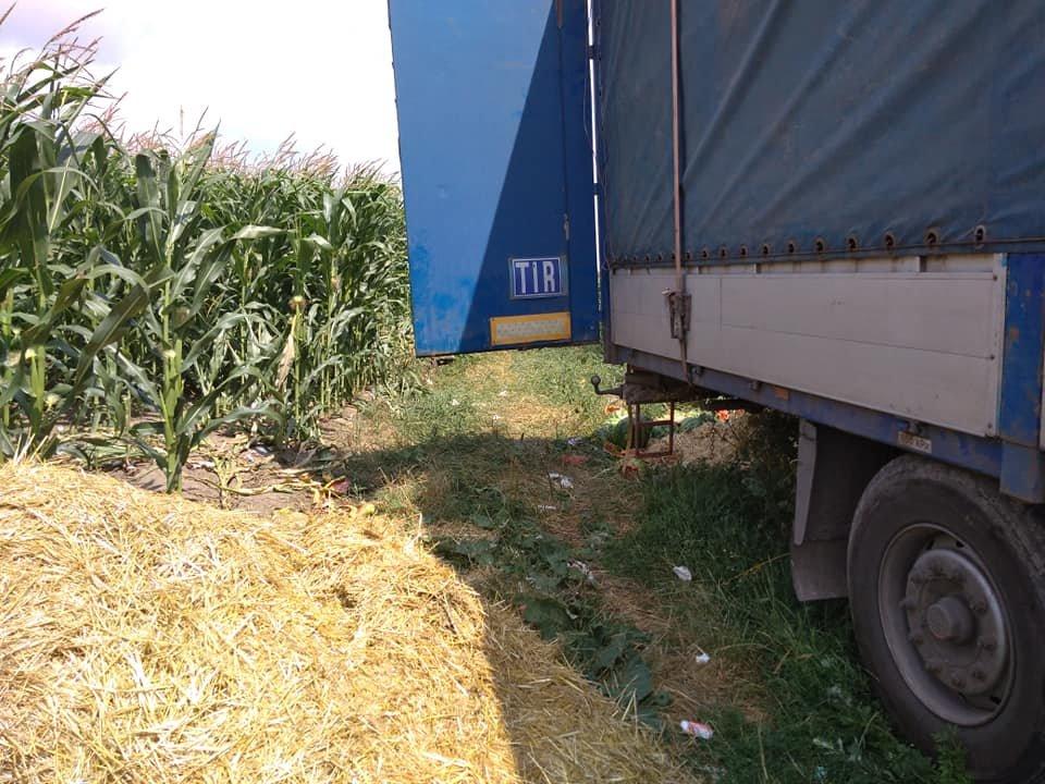 У Тернополі невідомі вивантажили цілу фуру кавунів гнити у полі поблизу міжнародної траси (ФОТО), фото-3