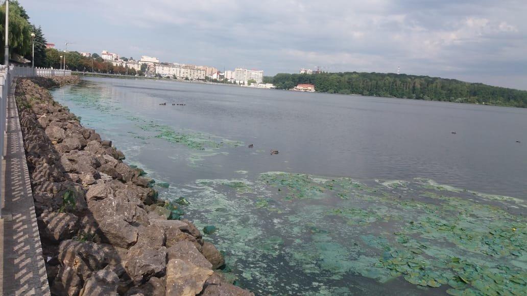 """""""Прийшов до ставу і жахнувся"""": тернополяни приголомшені нестерпним запахом, який шириться від міського озера (ФОТОФАКТ), фото-1"""