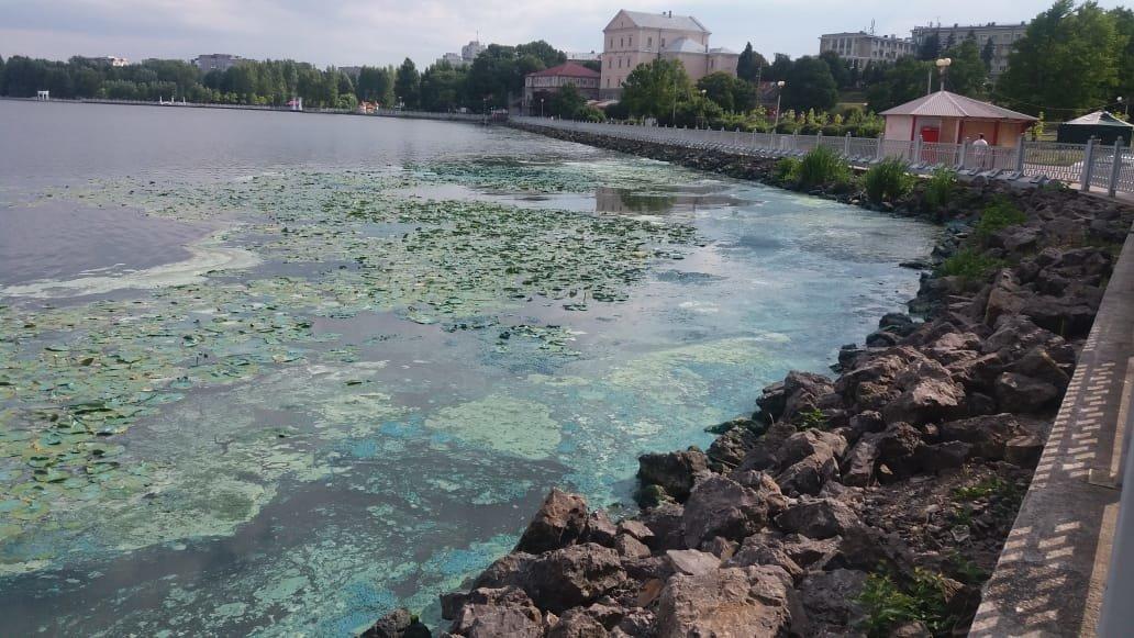"""""""Прийшов до ставу і жахнувся"""": тернополяни приголомшені нестерпним запахом, який шириться від міського озера (ФОТОФАКТ), фото-2"""