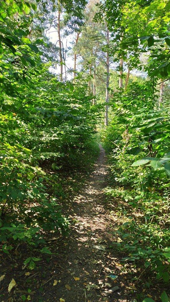 """""""Це справжні джунглі"""" – житель Тернопільщини розповів чому краще оминати тамтешній парк (ФОТОФАКТ), фото-8"""