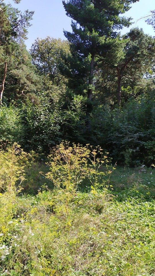 """""""Це справжні джунглі"""" – житель Тернопільщини розповів чому краще оминати тамтешній парк (ФОТОФАКТ), фото-6"""