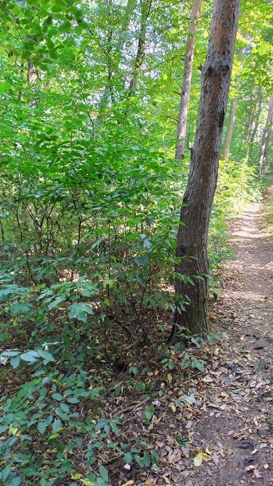 """""""Це справжні джунглі"""" – житель Тернопільщини розповів чому краще оминати тамтешній парк (ФОТОФАКТ), фото-1"""