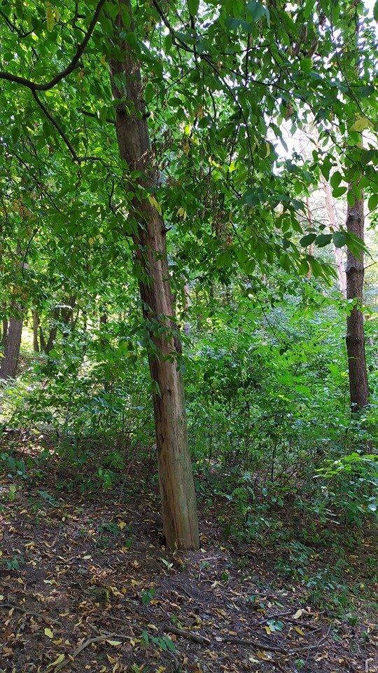 """""""Це справжні джунглі"""" – житель Тернопільщини розповів чому краще оминати тамтешній парк (ФОТОФАКТ), фото-2"""