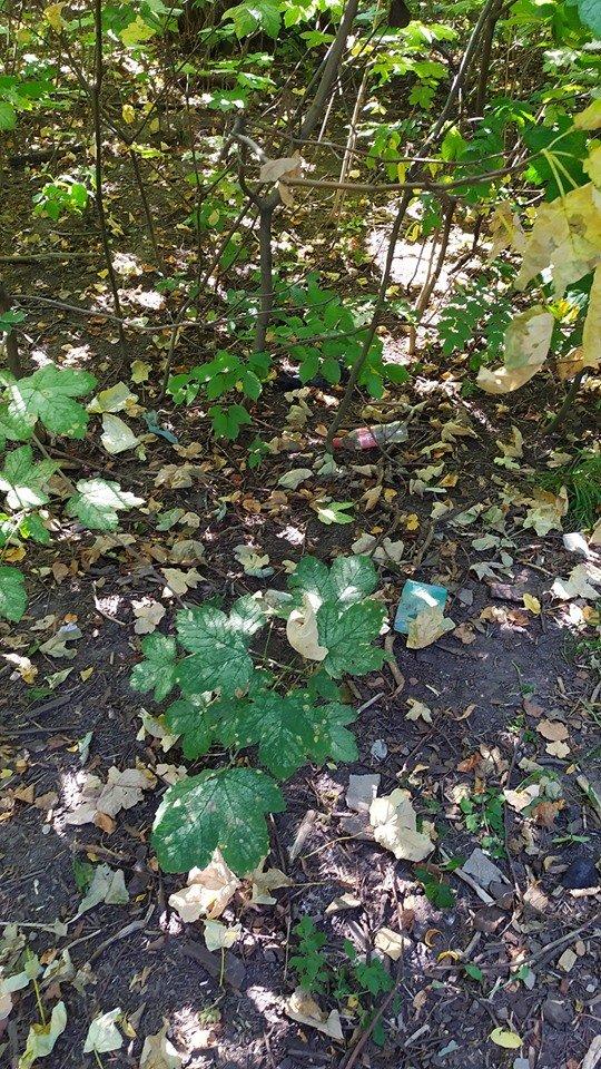 """""""Це справжні джунглі"""" – житель Тернопільщини розповів чому краще оминати тамтешній парк (ФОТОФАКТ), фото-9"""