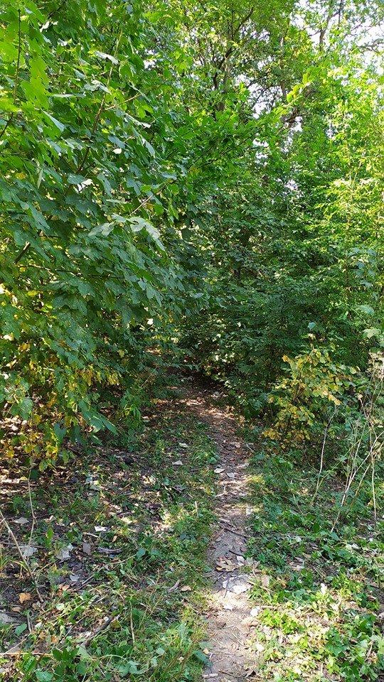 """""""Це справжні джунглі"""" – житель Тернопільщини розповів чому краще оминати тамтешній парк (ФОТОФАКТ), фото-11"""